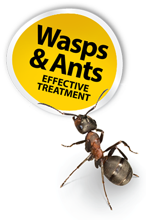 Cheshire Pest Solutions - Wasp and Ant treatments